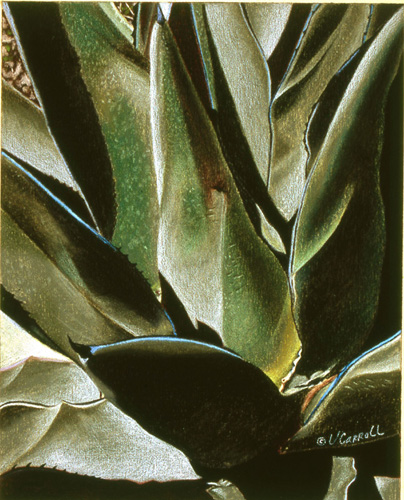 Agave-Virginia-CarrollLG