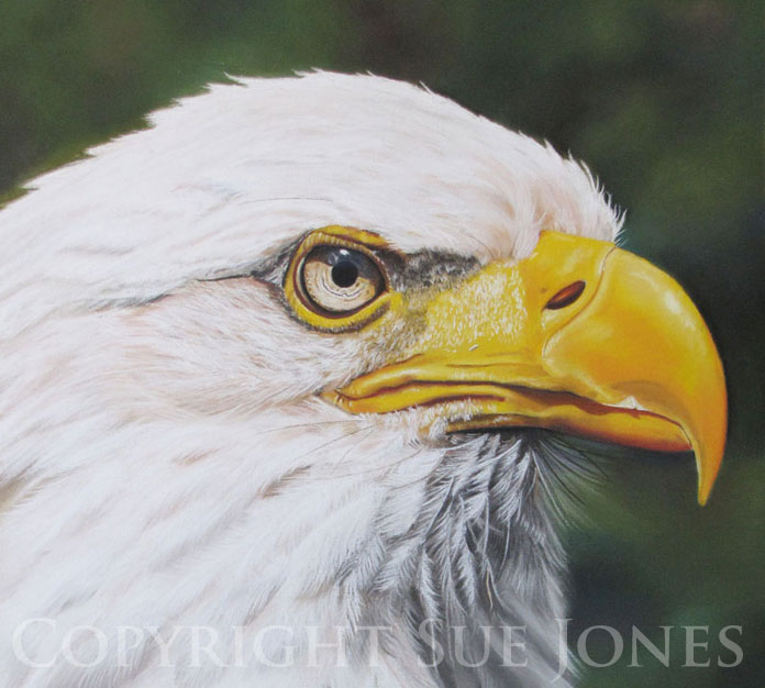 Bald-Eagle-Sue Jones