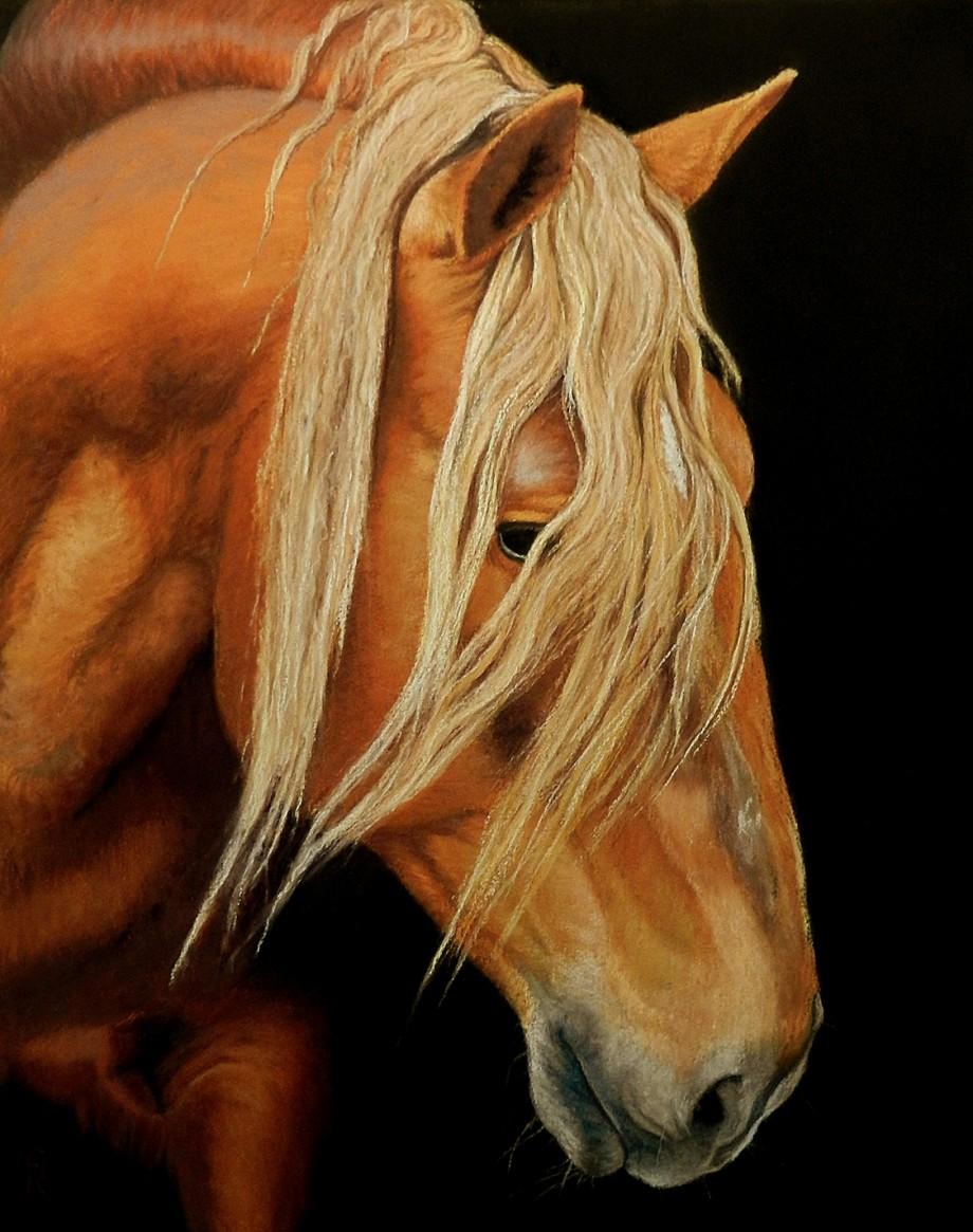 Belgian_Draft_Horse-Sarah-Rose