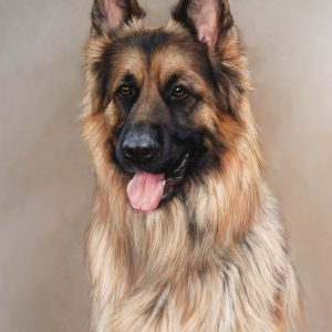 German Shepard-Lisa-Ober