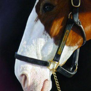 Horse-Lisa-Ober