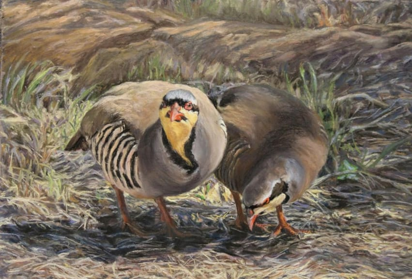 susan_goodmundson-chukar_with_his_hen