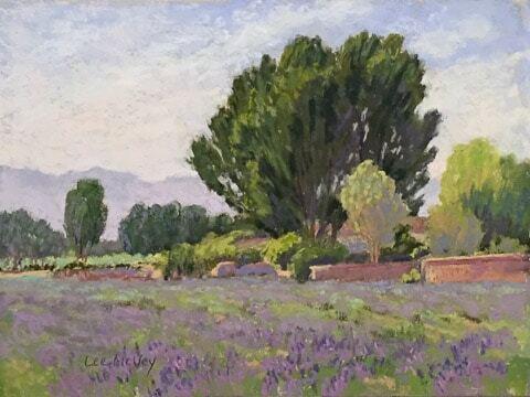lavenderfield_72