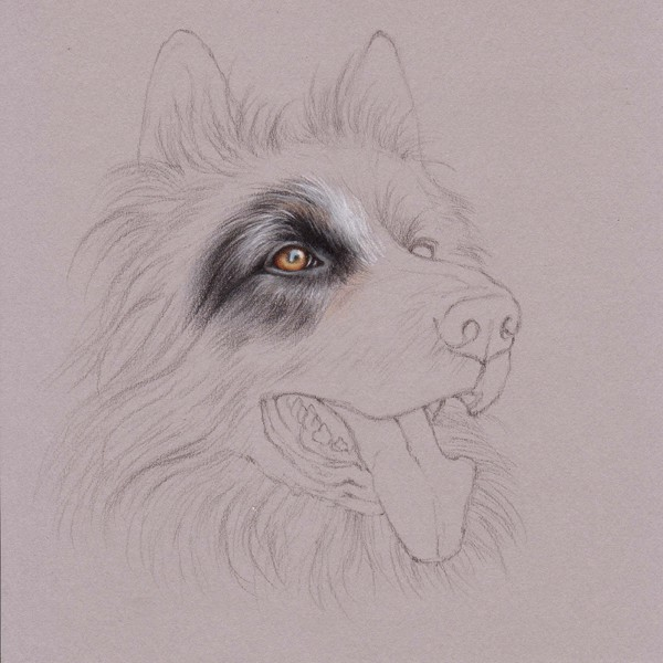 Uart Tip Drawing Fur With Colored Pencils Step By Step